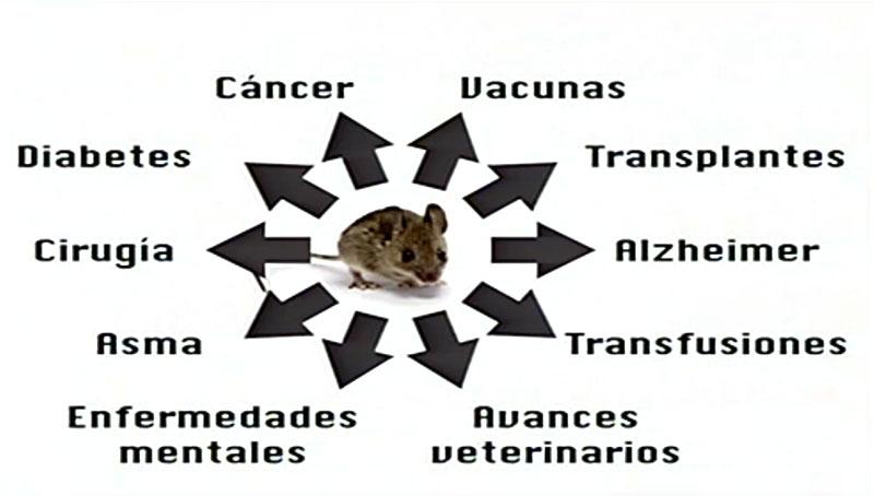 Campos en los que se avanza gracias al uso de animales