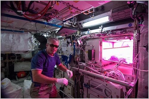 Foto vía NASA/Koichi Wakata