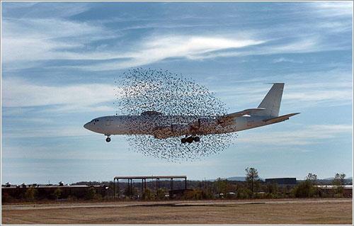 E6B y pájaros por Kaia Larsen
