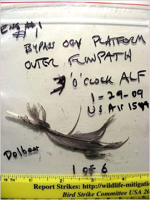 Pluma encontrada en el motor nº 1 - NTSB