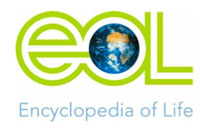 Logo Encyclopedia of Life