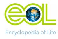 Logo Encyclopedia of Life