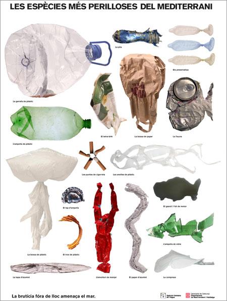 Las especies más peligrosas del Mediterráneo