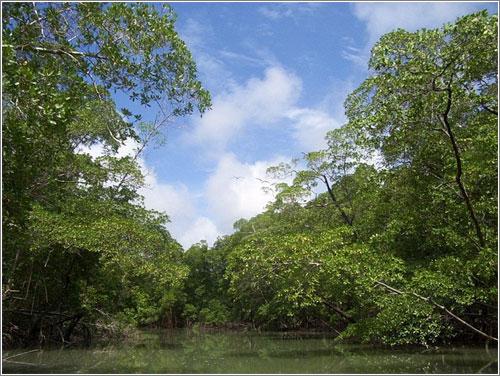 Amazonas-Pulmon-Norl