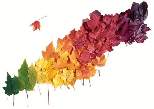 Colores de las hojas y el clima