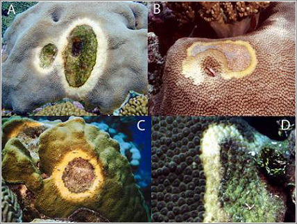 Coral-Enfermo
