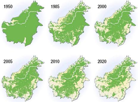 Deforestación de la isla de Borneo