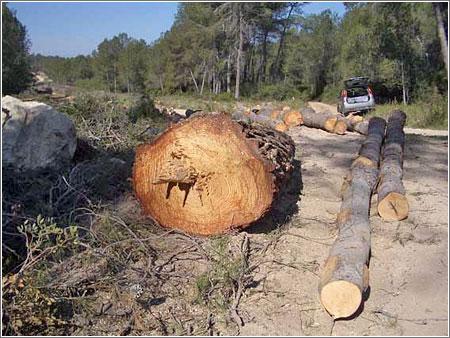 Pont Del Diable Deforestacion