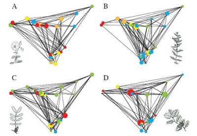 Proteger los bosques con teoría de redes