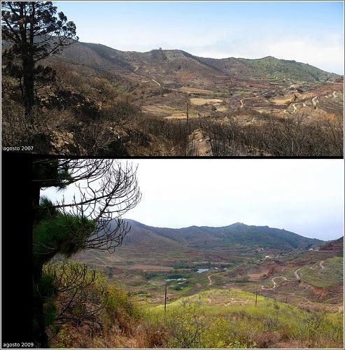 Recuperación de los montes de Tenerife. Fotografía de José Mesa
