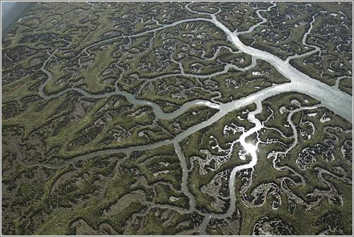 Armonía fractal: Doñana y sus marismas, de Héctor Garrido