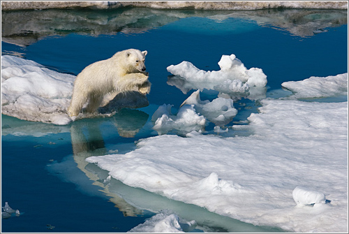 Polar Obsession © Paul Nicklen
