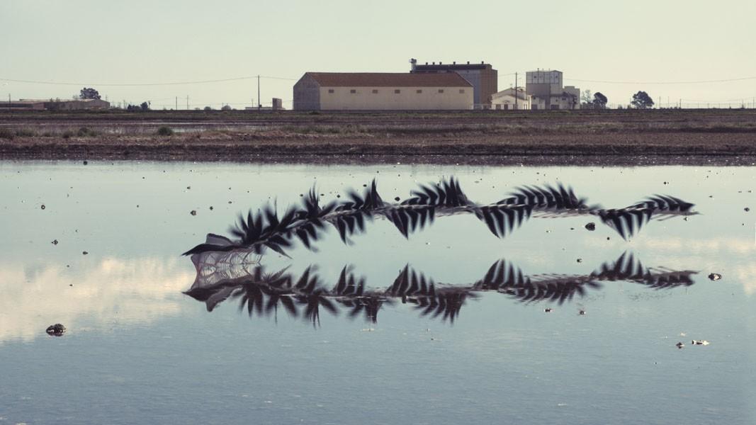 Ornitografías (C) Xavi Bou / xavibou.com