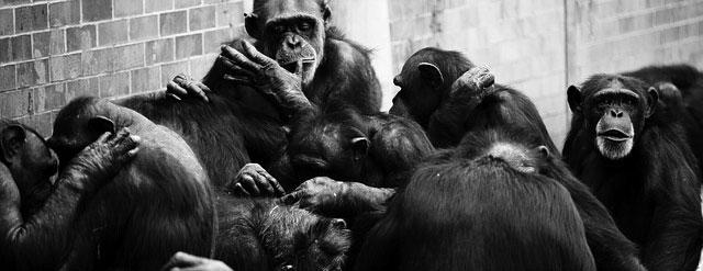 Monos infinitos