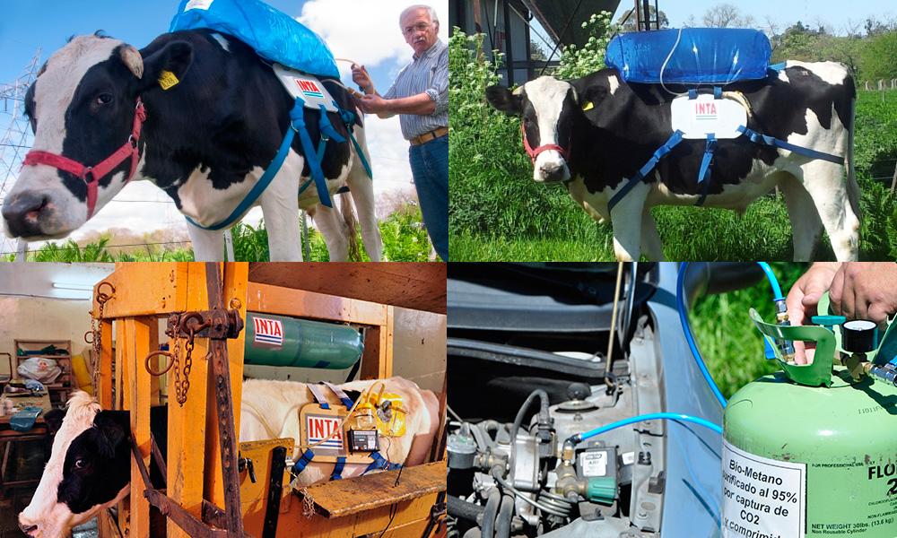 Vacas, pedos y energía