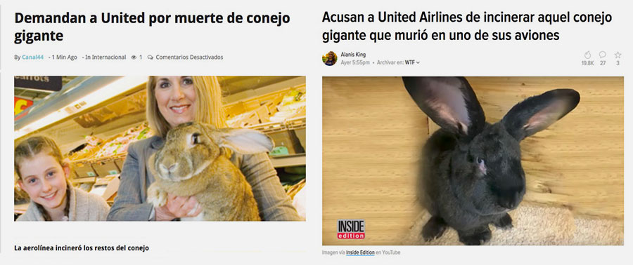 ConejoGiganteMuerteEntreLosAsientos