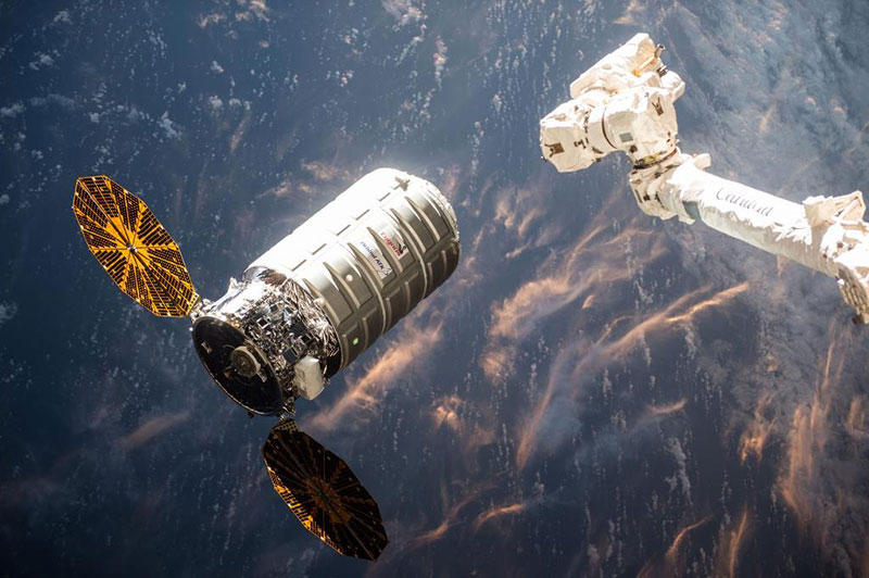 Una Cygnus a punto de ser capturada