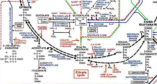 Ruta metabólica / zoom