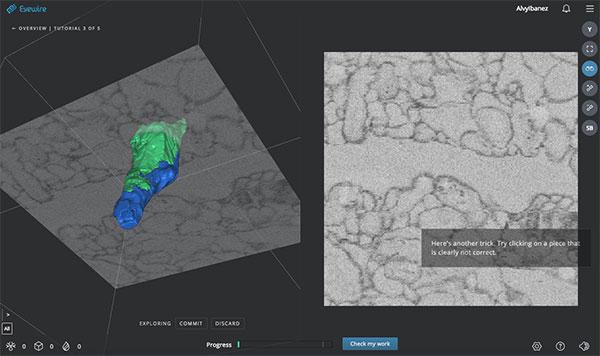 Eyewire, un juego científico colaborativo a modo de puzle 3-D para mapear el cerebro humano