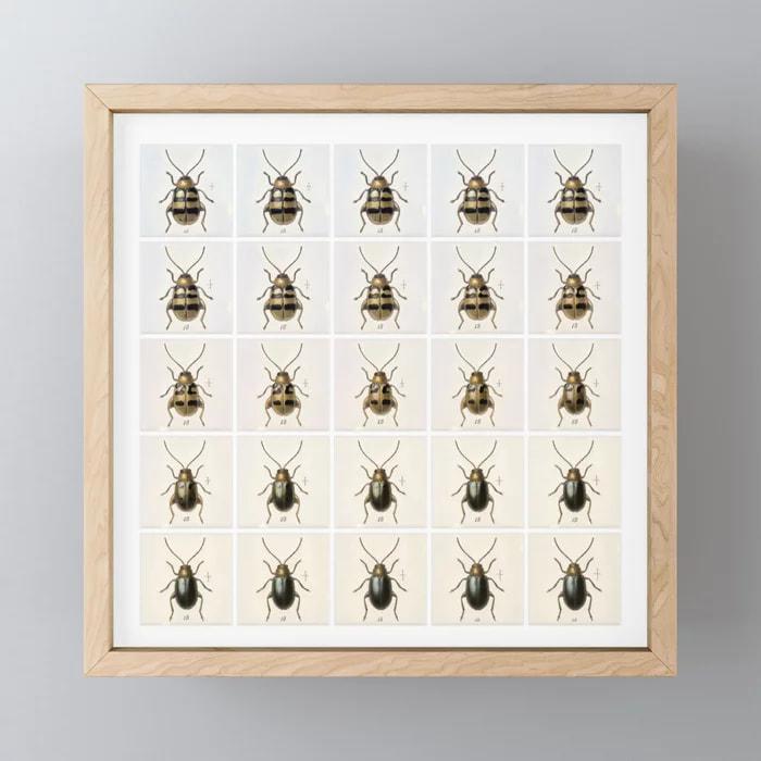 Confusing coleopterists / Bernat Cuni