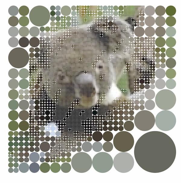 Koalas to the Max dot Com