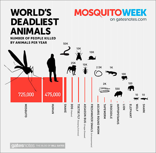 Mosquito-Animal-Mortiferol