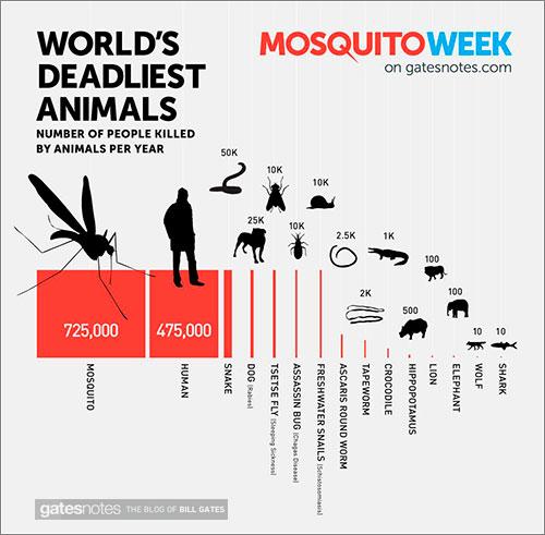 Mosquito-Animal-Mortiferol